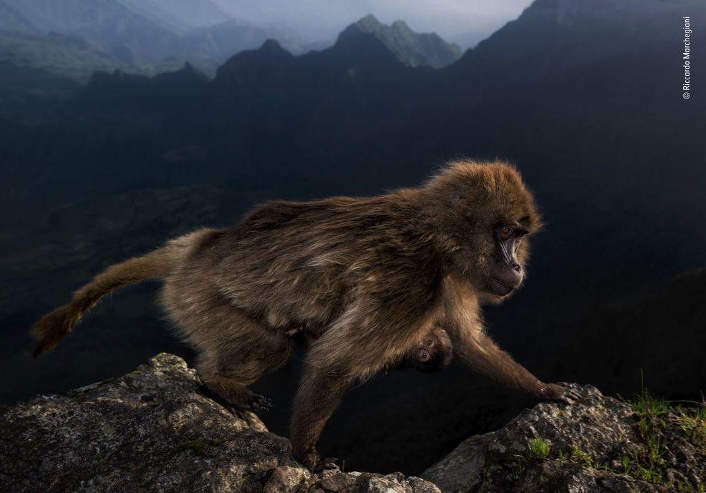 Najkrašie fotografie prírody a zvierat