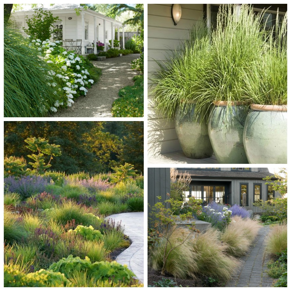 Beautiful Ornamental Grasses for the Garden