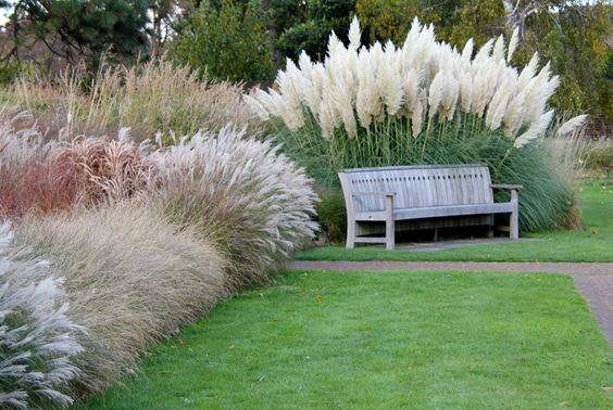 pampas grass display